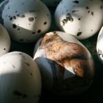 zając jajko wielkanoc