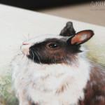 malowany królik
