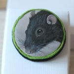 malowany szczur